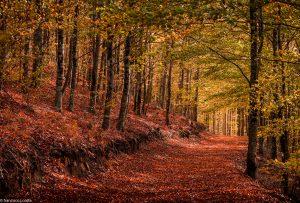 Comemorem o Dia Internacional das Florestas!
