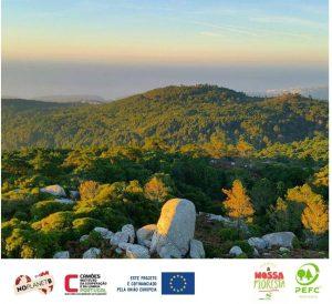 A certificação florestal em Portugal