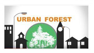 A floresta também pertence à cidade!
